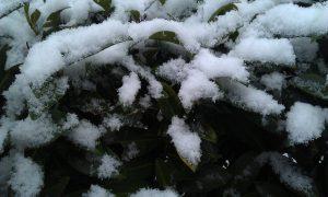 Winter-Hautpflege